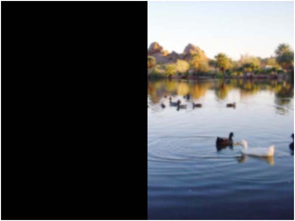 Ducks swimming, picture is blurry with the left side completely black